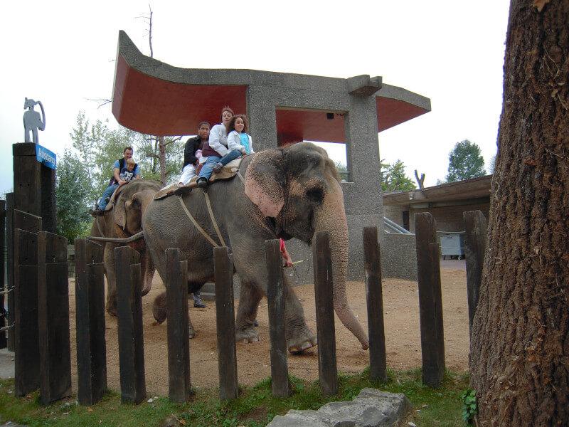 Une promenade à dos d'éléphant au zoo de Rapperswil